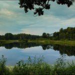 Озеро в Беловежской пуще