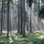 Пущанский лес