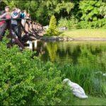 Центральный Ботанический Сад фотография 19