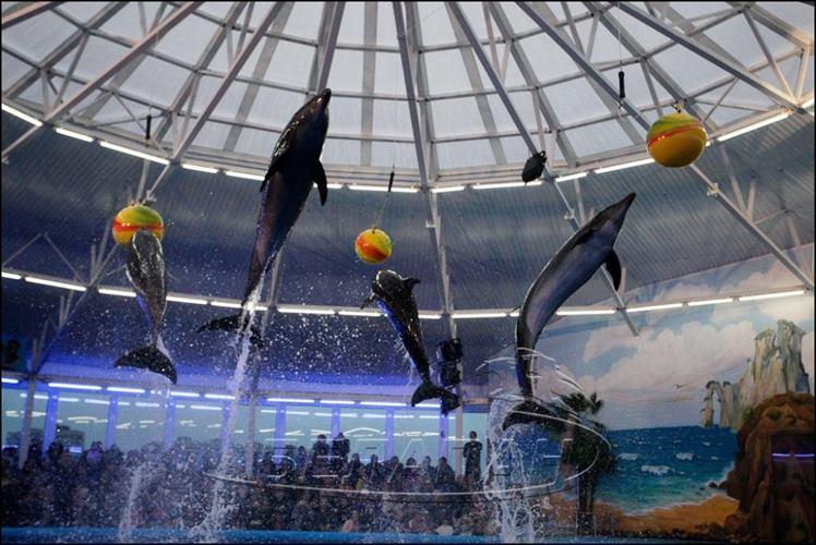 Минский дельфинарий «Немо»