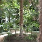 Гомель зимний сад фотография 11