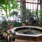 Гомель зимний сад фотография 14
