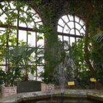 Гомель зимний сад фотография 2