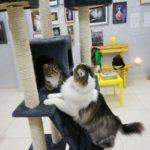 Музей кота фотография 2