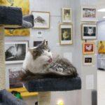 Музей кота фотография 1
