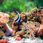 Океанариум Открытый океан фотография 4