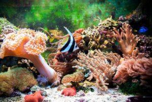 Океанариум Открытый океан фотография 6