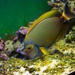 Океанариум Открытый океан фотография 7