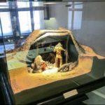 Гродненский историко-археологический музей 6