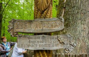 Дуб патриарх в Беловежской пуще