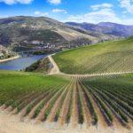 Сельское хозяйство в Португалии