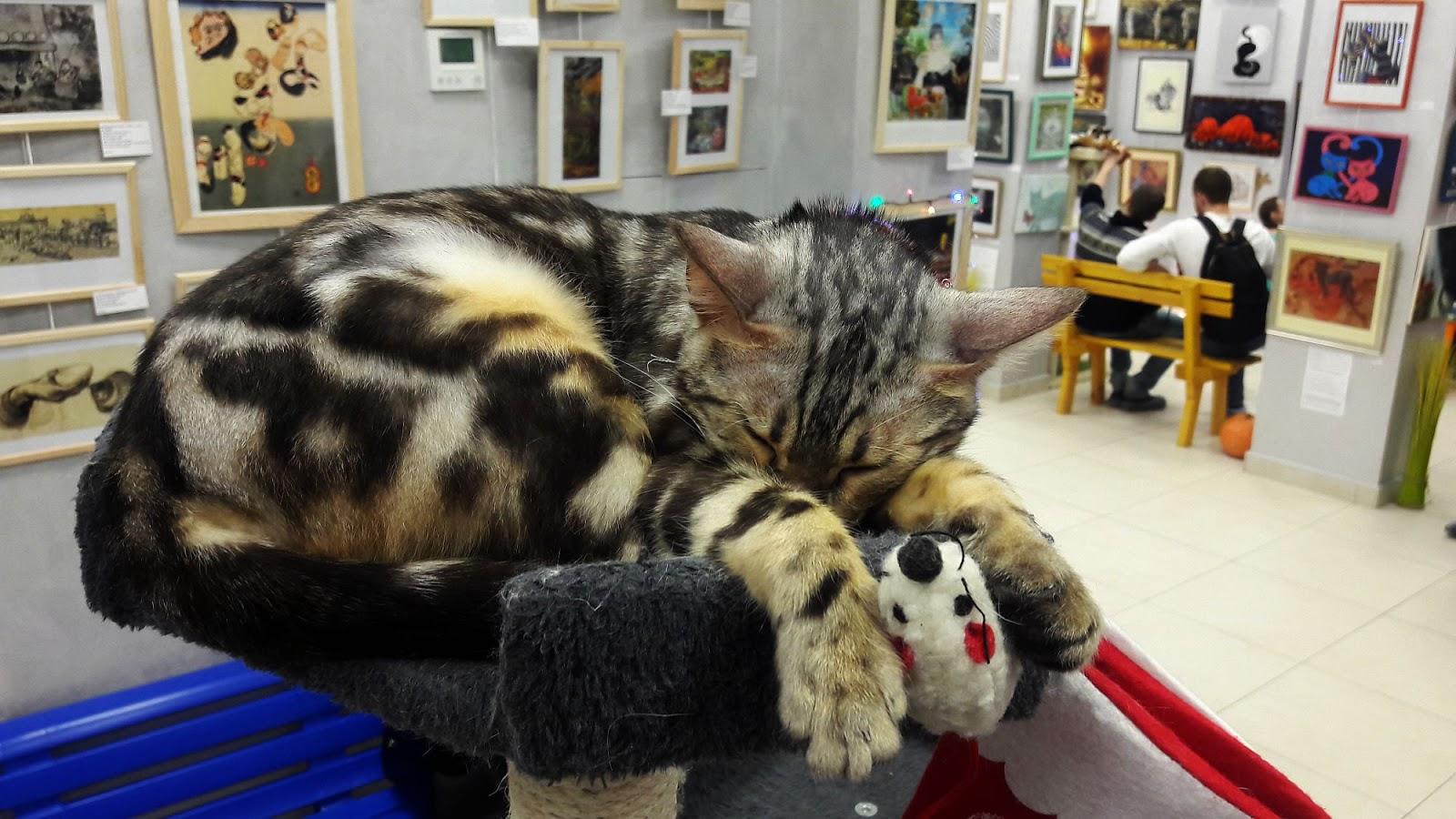 Музей кота в Минске