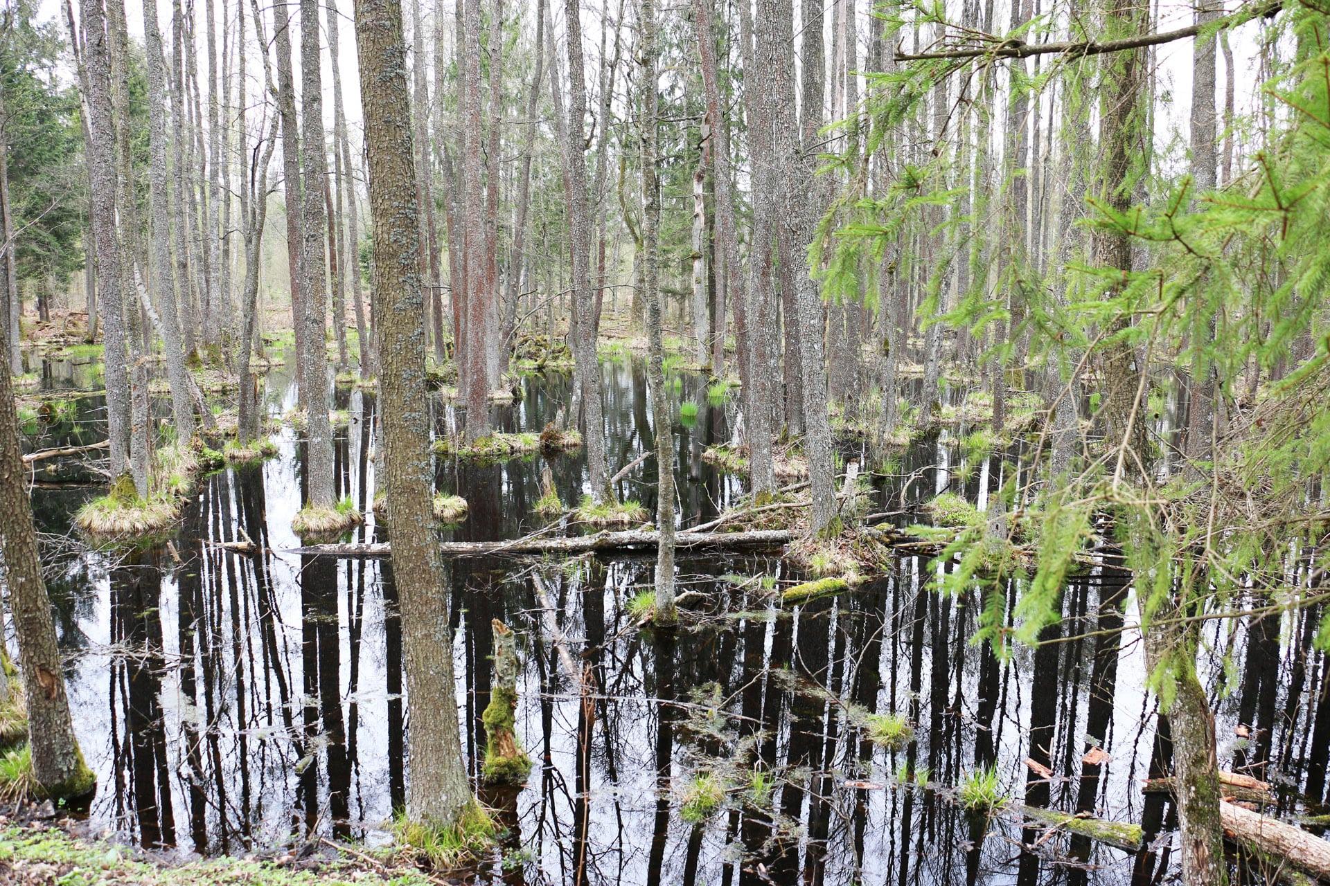 Болото Дикое древнейшее болото Европы