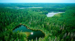 Нарочанский парк