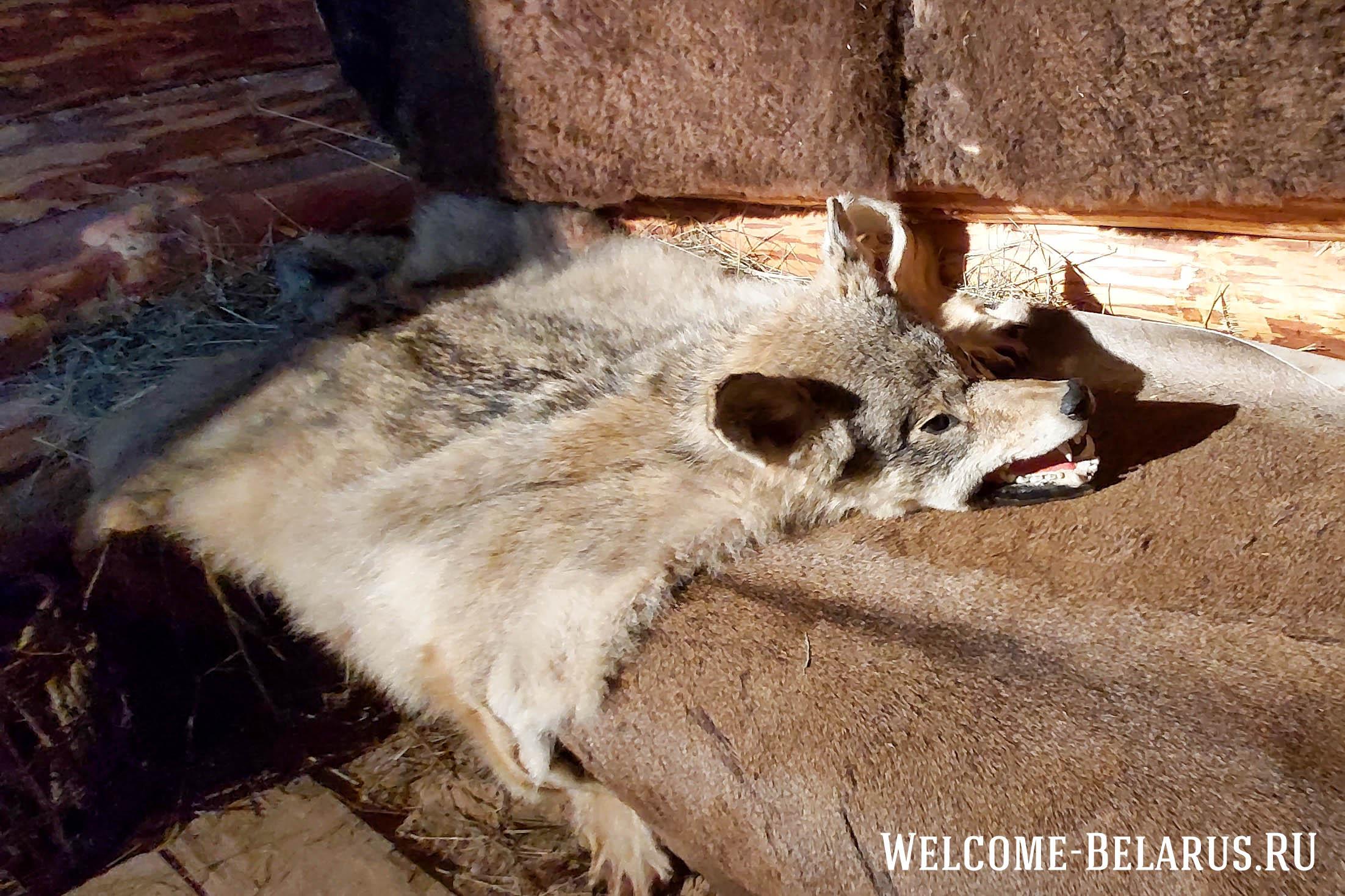 Шкура волка в зале о присваивающим хозяйстве