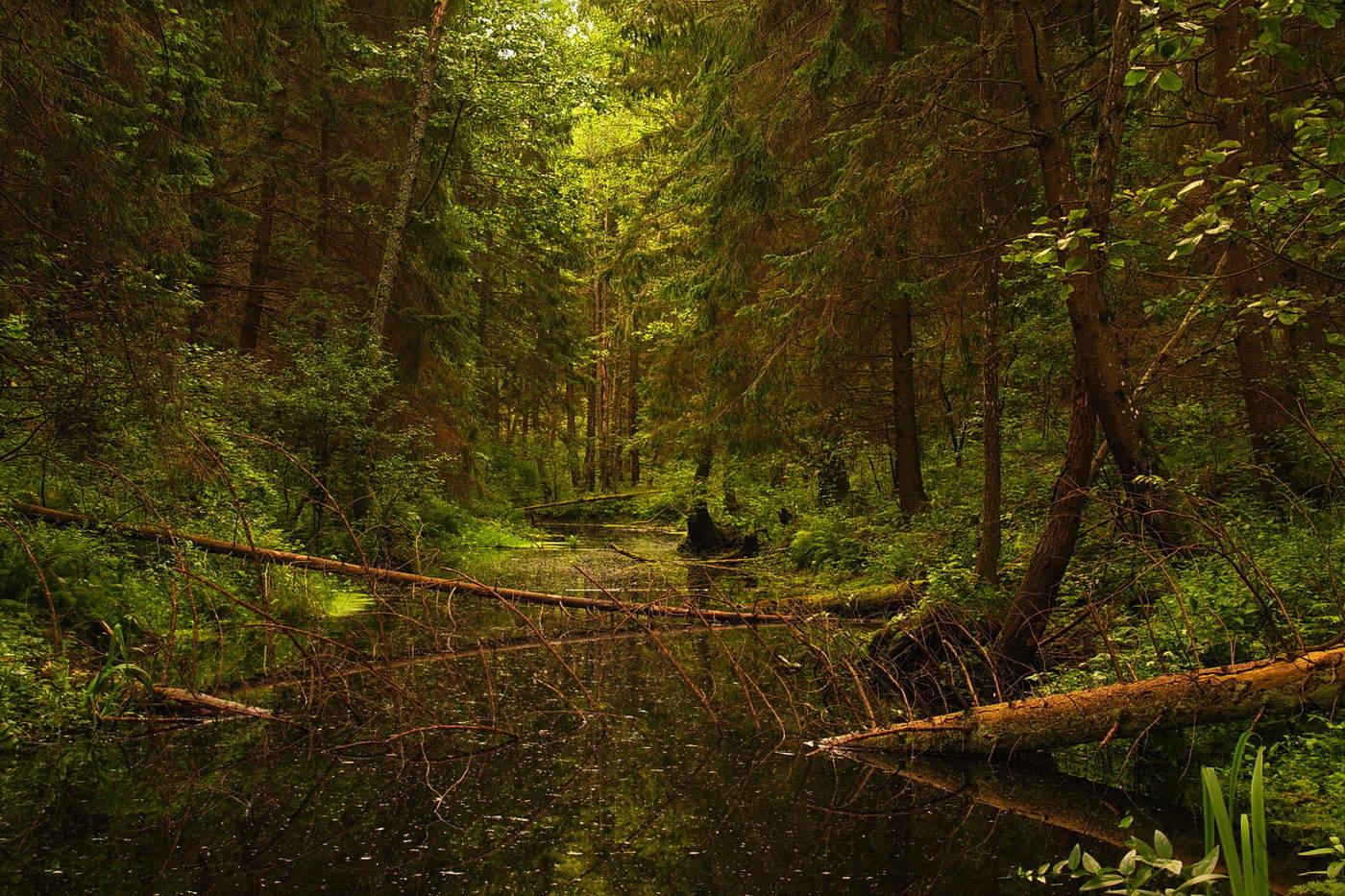 Белорусские джунгли