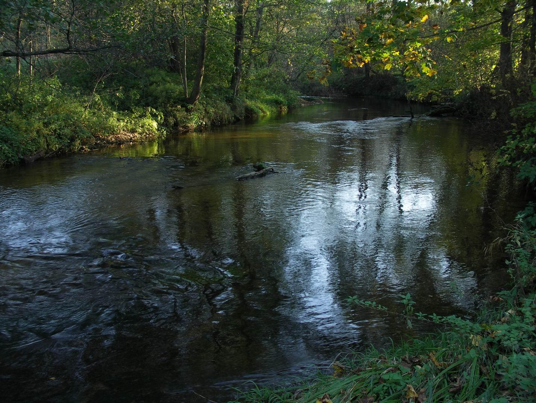 Река в Налибокской Пуще