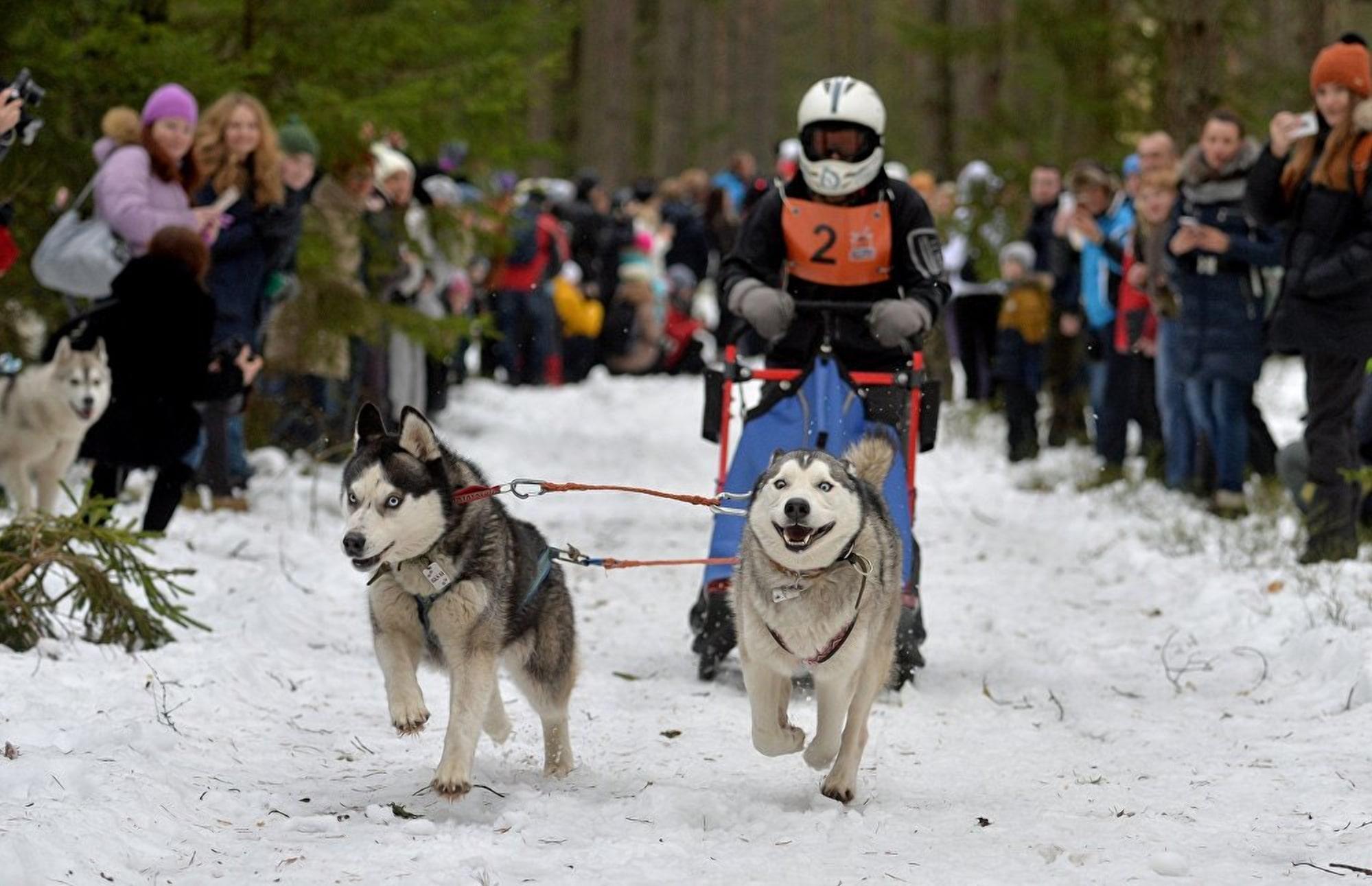 Международные фестиваль Северные псы