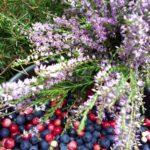 Плоды налибокской пущи