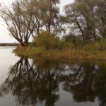 Природа Припятского парка