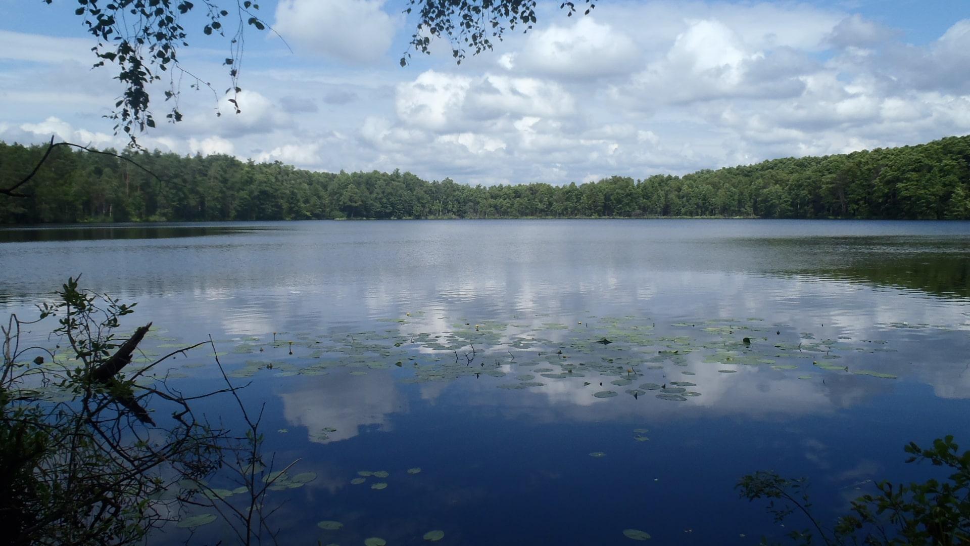 Рядом с озером в Брестской области нашли огромный клад