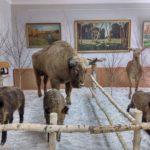 дворец в жиличах, чучела животных