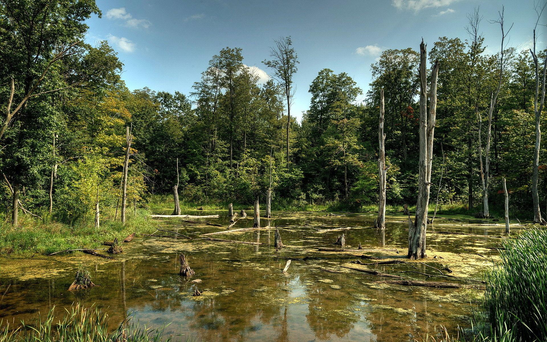 Белорусские болота могут вместить в себя Черногорию