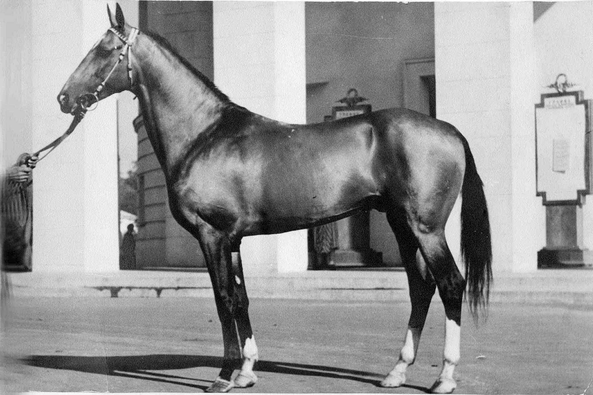 Кто привез драгоценных лошадей в Брест, осталось неизвестным