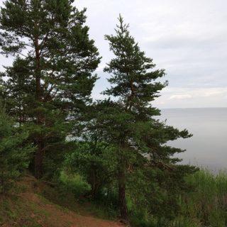 Озера в Нарочанском парке