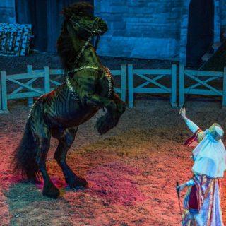 Наносы конное шоу