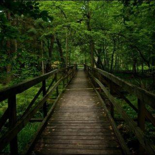 Беловежская пуща, лес