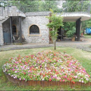 Цветы в Коробчицах